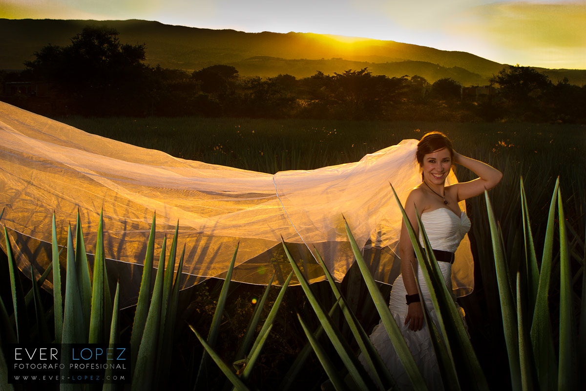 Trash the Dress campo de agave Tequila Jalisco – Rocio y Ernesto
