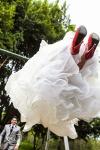 fotos boda guadalajara jalisco mexico novia columpio vestido zapatos rojos boda tren novios casuales formales fotos mexico fotografos profesionales de bodas mexico fotos boda anillos de compromiso guadalajara jalisco mexico fotografos profesionales de bodas mexico, fotos creativas de boda mexico