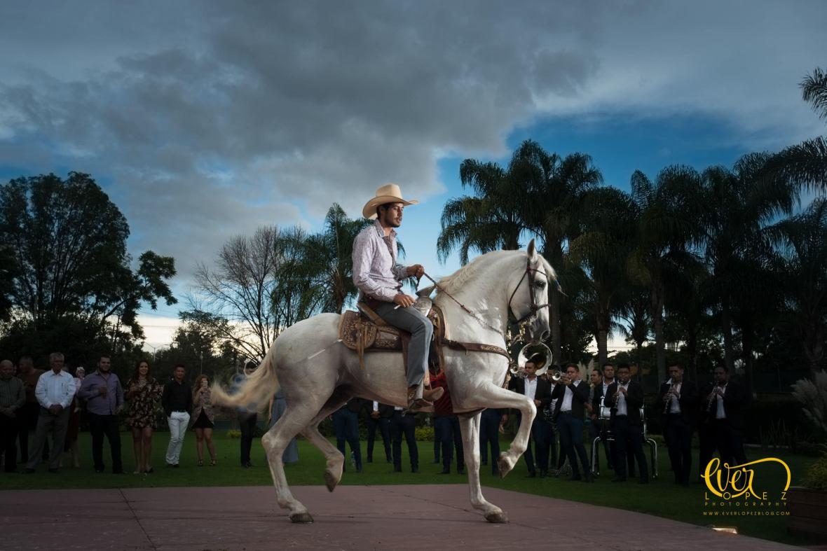 show de caballos pura sangre